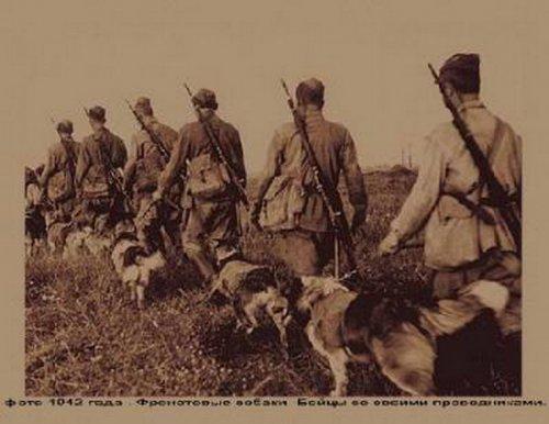 Служебные собаки в военном деле