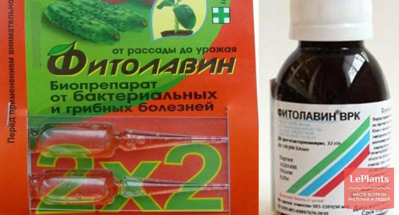 Препарат Фітолавін для рослин